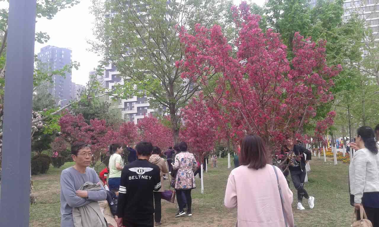 长白森林公园樱花节